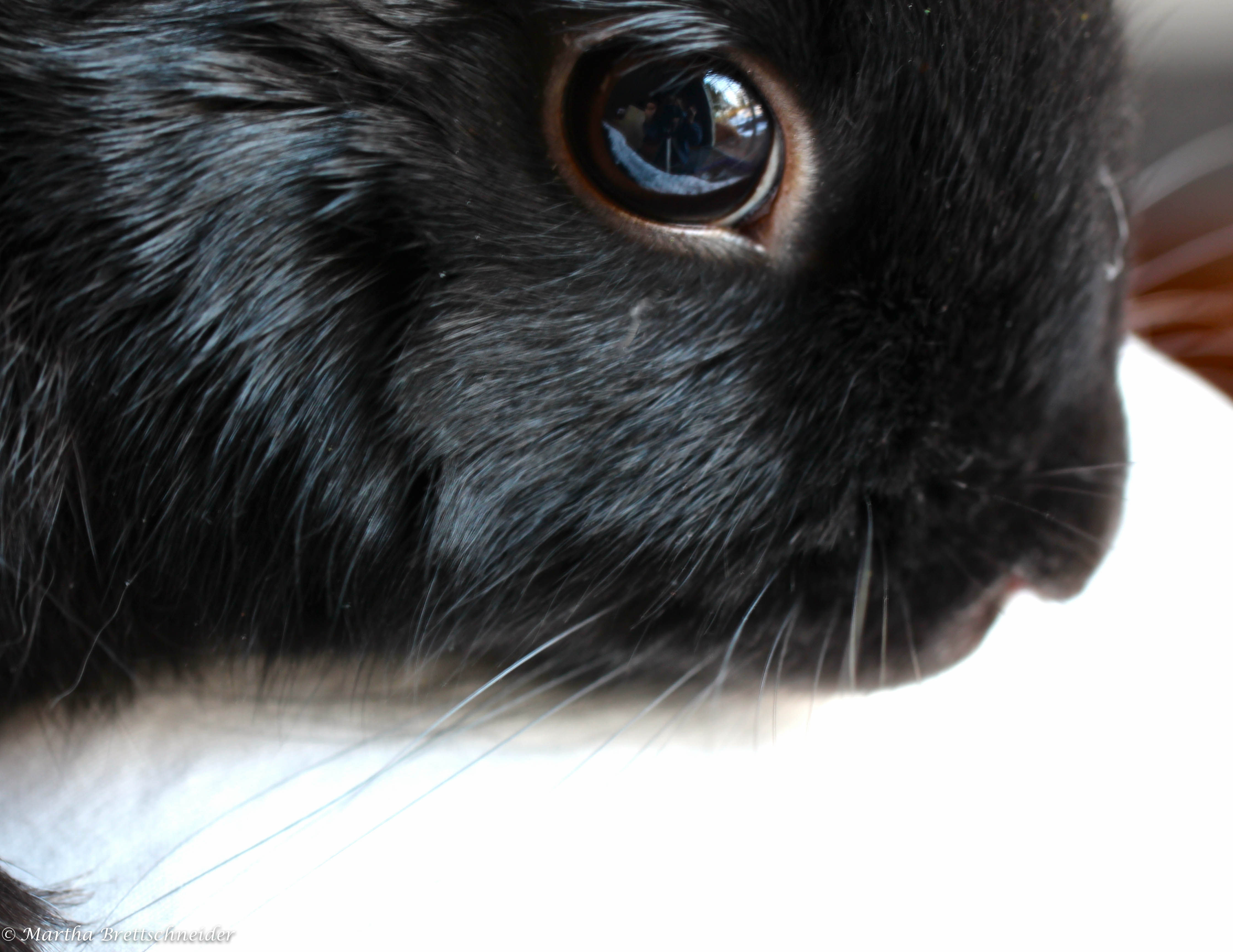 whiskers on bunny