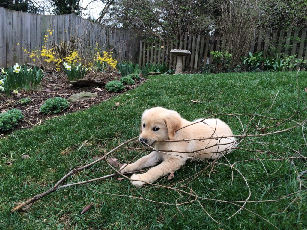Apollo with stick