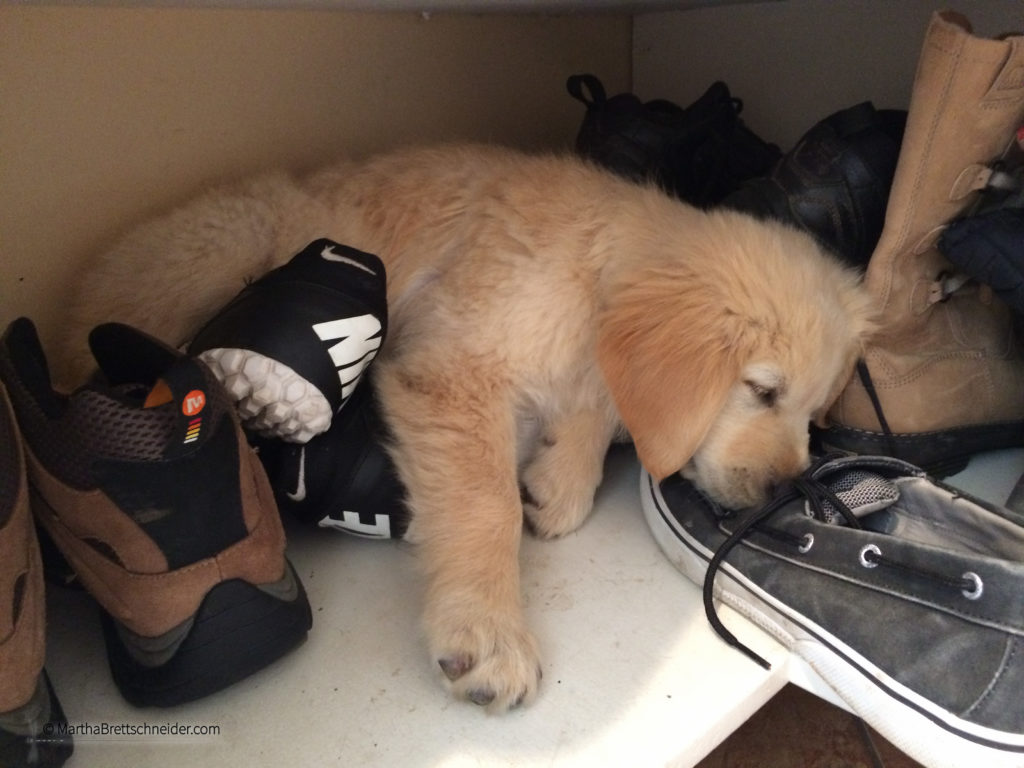 apollo sleeping in shoes-2