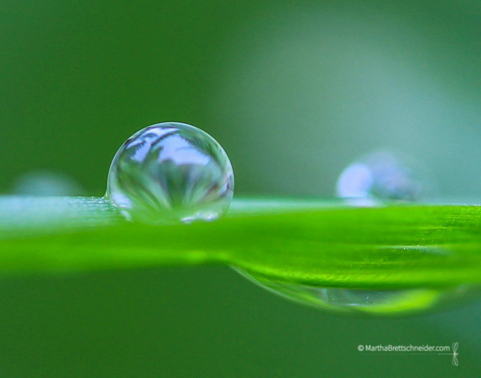 raindrop on grass blade