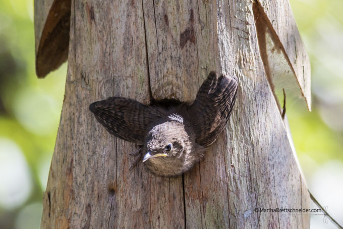 Photo of baby bird taking flight, mindfulness