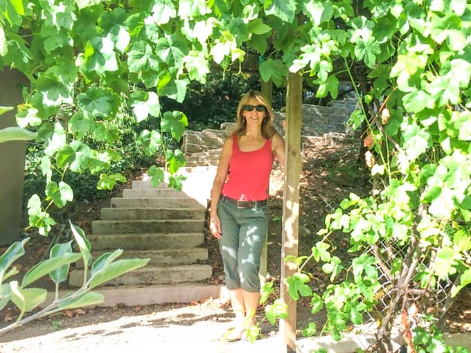grape arbor in WA garden