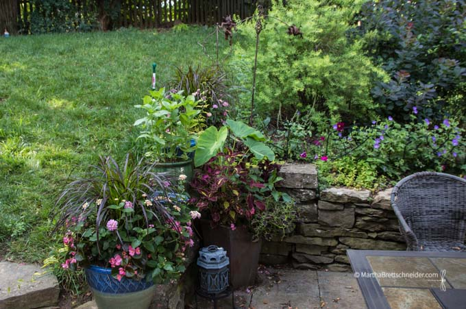 Pots strategically placed to block dog entry into garden beds