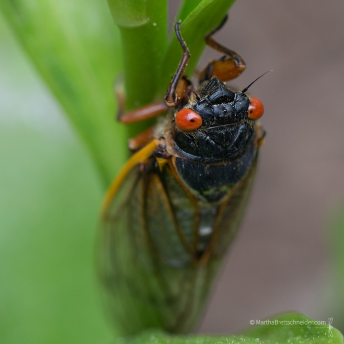 cicada spring flower photographs