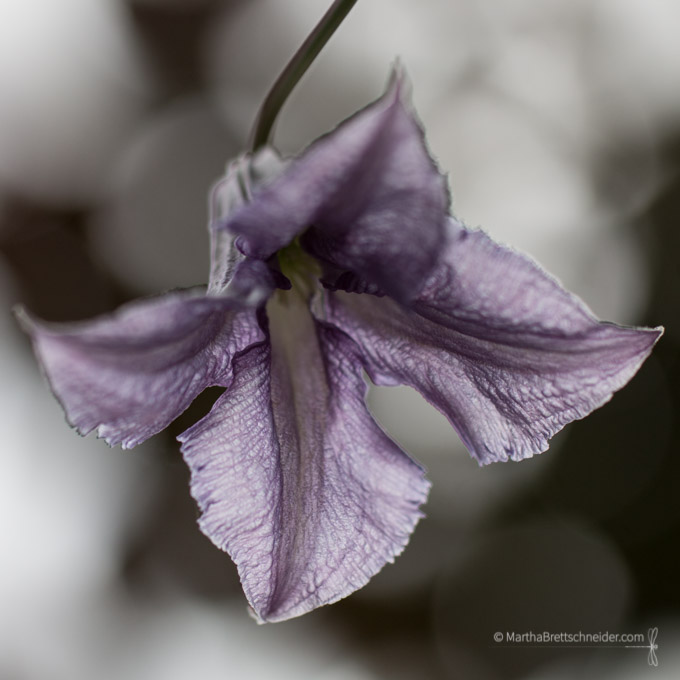betty corning bokeh spring flower photographs
