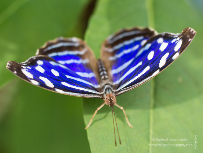 Butterfly Photograph Royal Blue