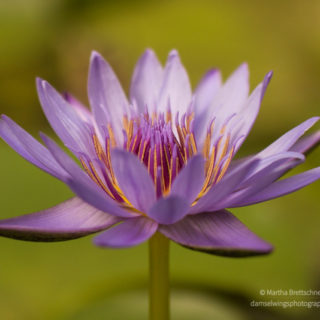 lotus for follow joy to find your purpose article
