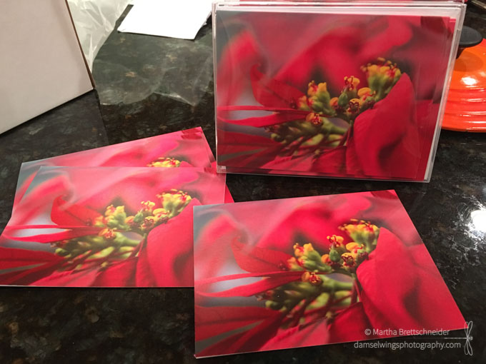 Damselwings Photography poinsettia abstract notecards for photography award winner blog